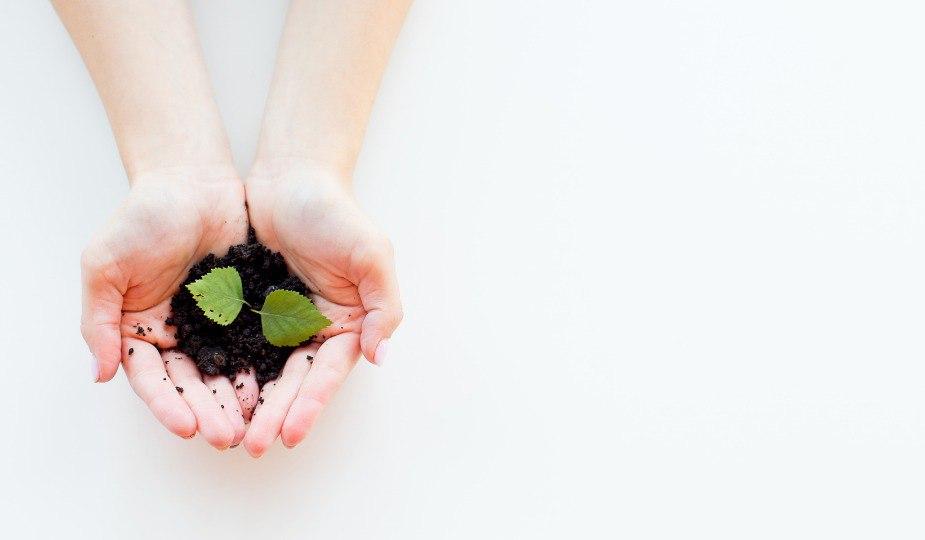 5 Beneficios del cuidado de Plantas